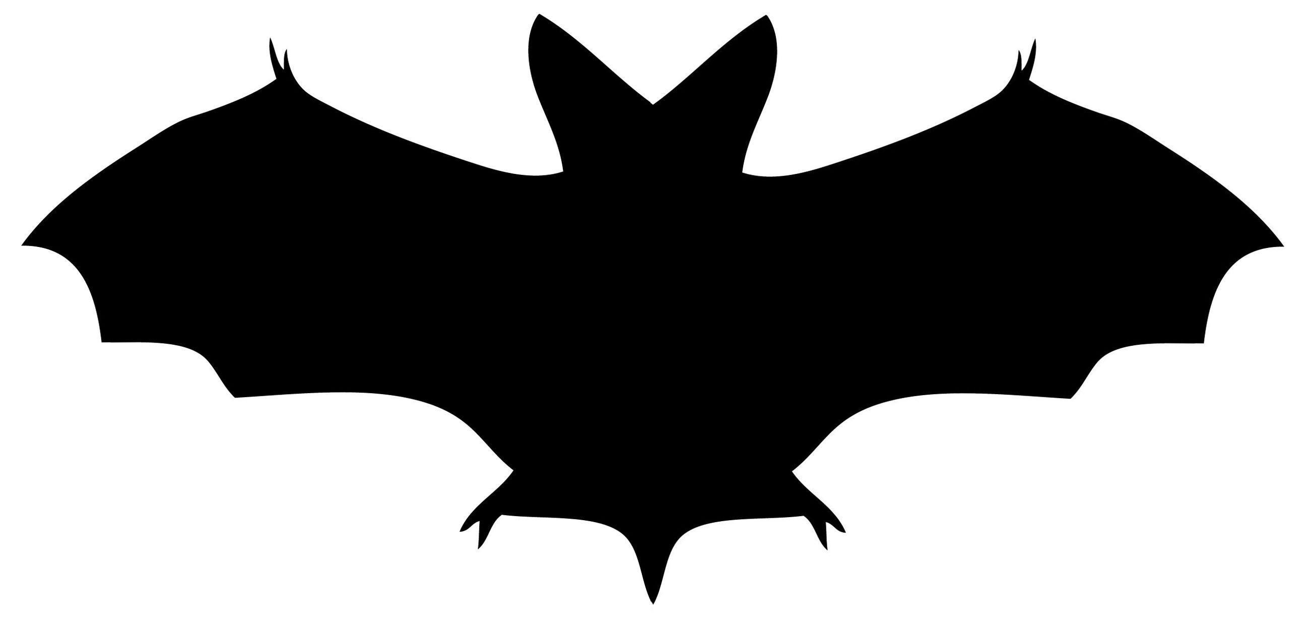 12 Bat Images