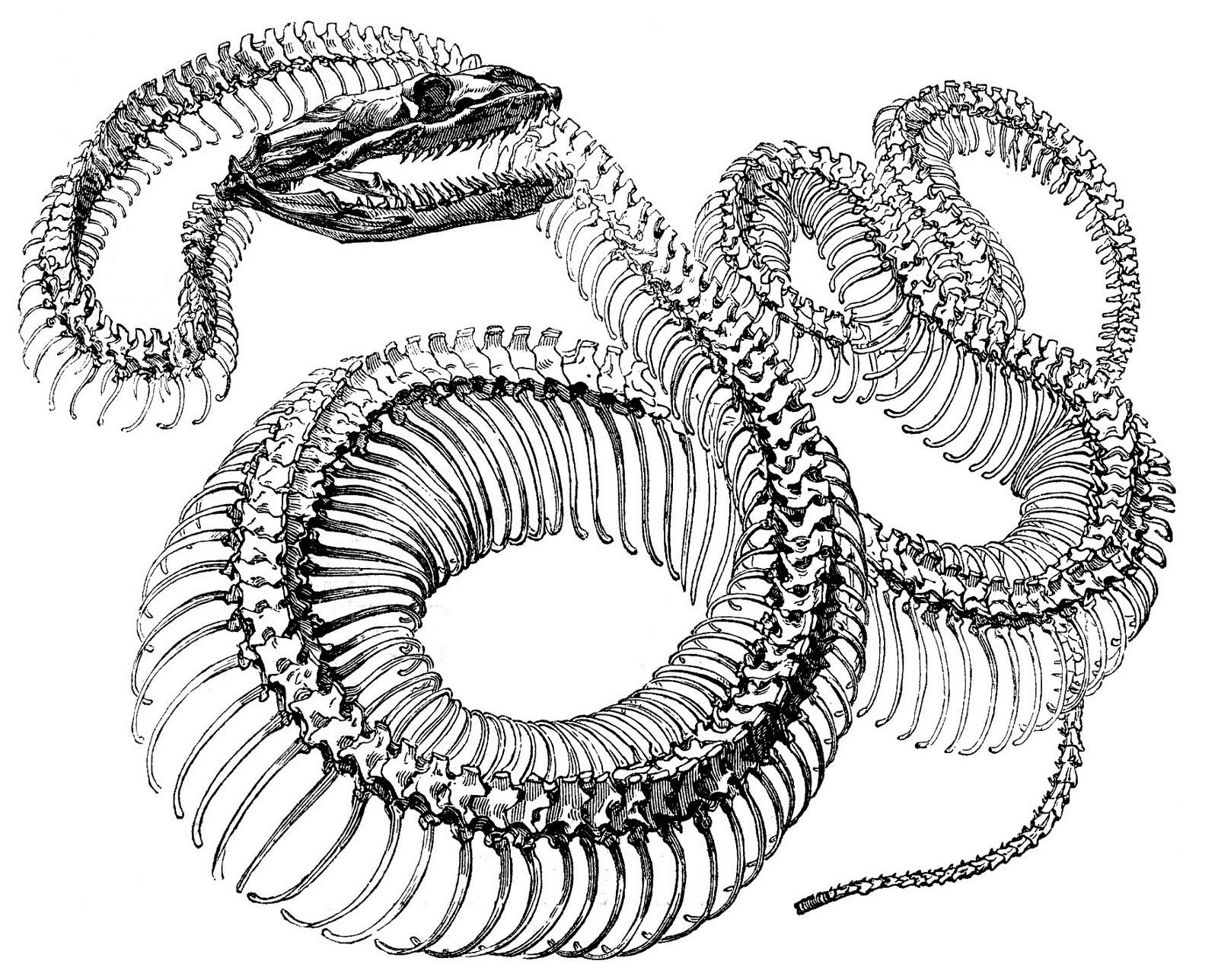 Two Headed Snake 8 Snake Images