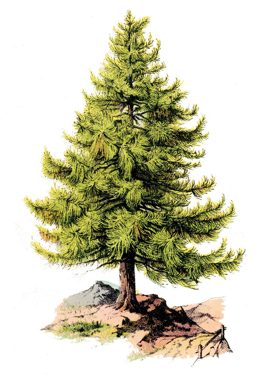 Resultado de imagem para pine