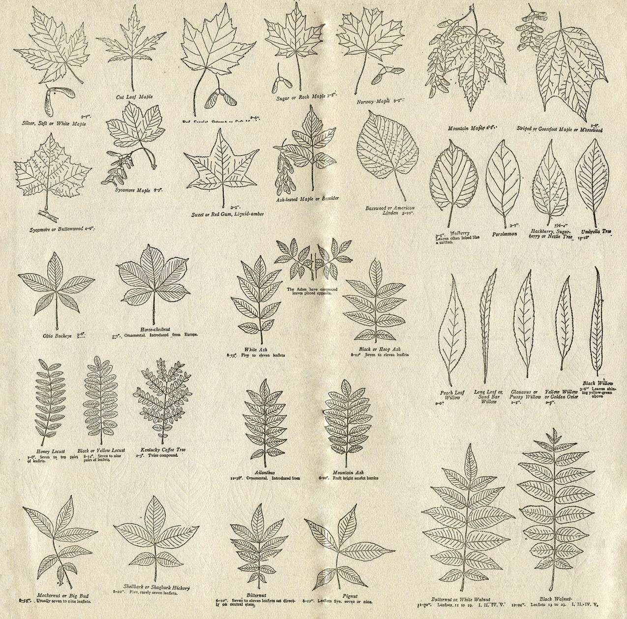 Printable Vintage Field Journal
