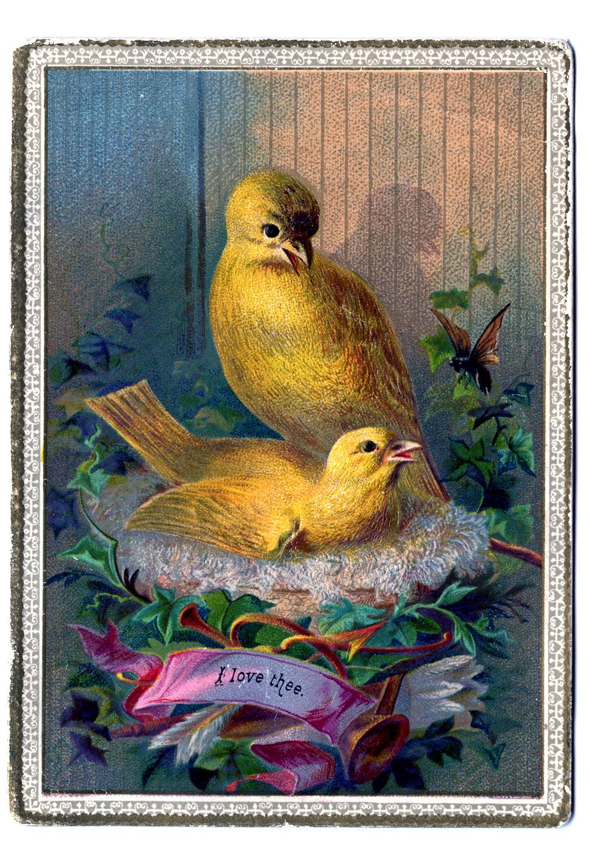 Vintage Clip Art Darling Canary Birds On Nest The