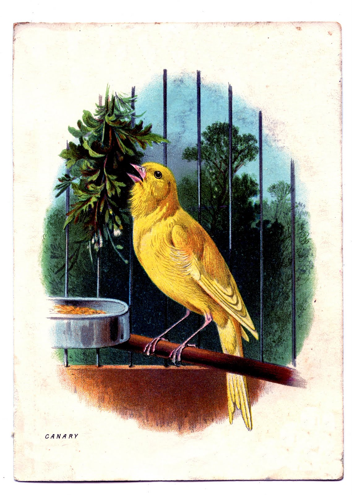 Vintage Clip Art Sweet Canary In Cage The Graphics Fairy