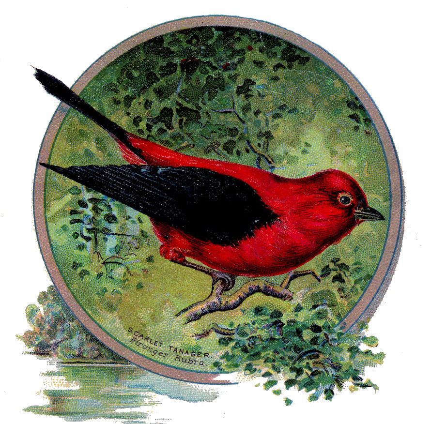 Vintage Clip Art Sweet Red Bird The Graphics Fairy
