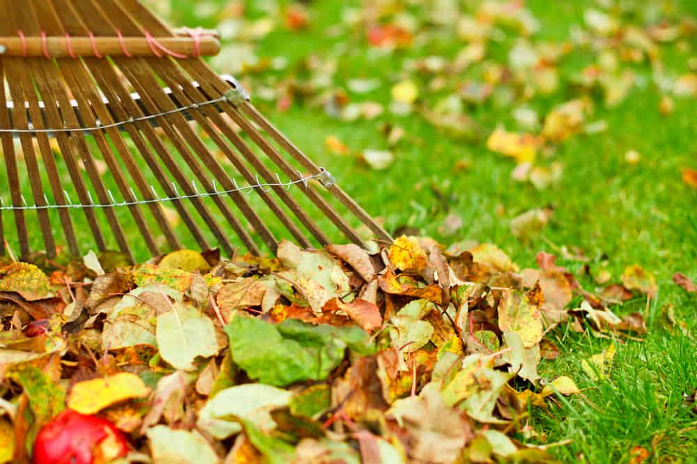 Should I Be Raking My Leaves The Grass Outlet Texas