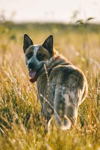 dog farm argentina cattle