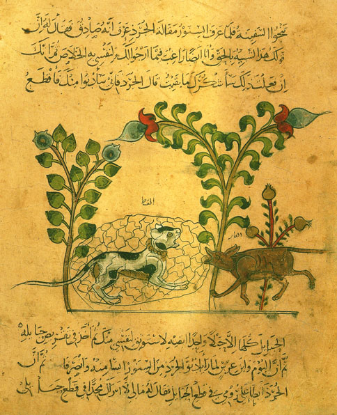 Cat in Arabic Script from 1350, Cat in Middle Ages Manuscripts