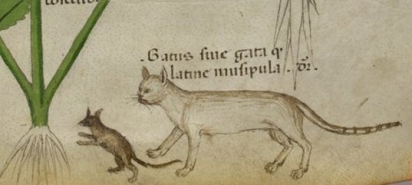 1440 Herbal book, Italian N.Sloane 4016 f.40 Cat and Mouse Source: British Library, Cat in Middle Ages Manuscripts
