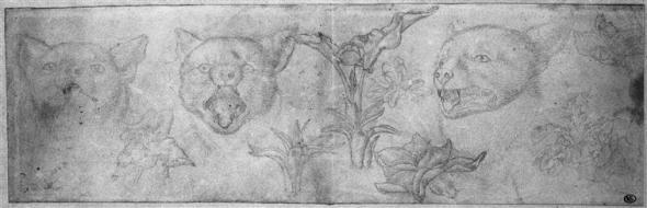 Three Sketches of a Cat's Head Pisanello 15th Century, cats in magic