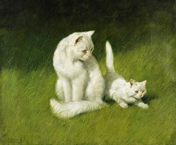 Angora Cat and Kitten Privated Collection