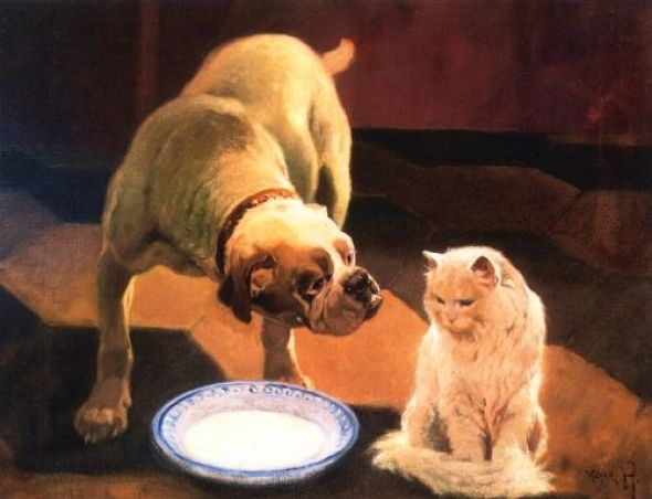 Bulldog and Cat Private Collection
