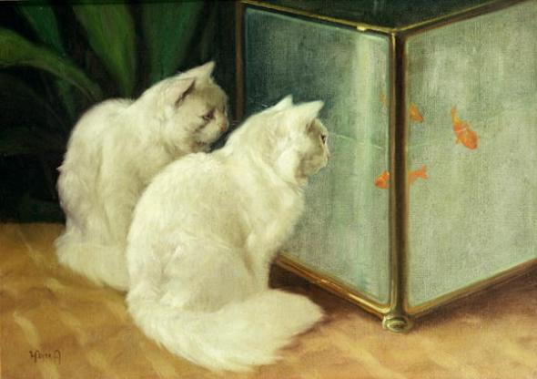 Two Persians in front of a Goldfish Tank Private Collection
