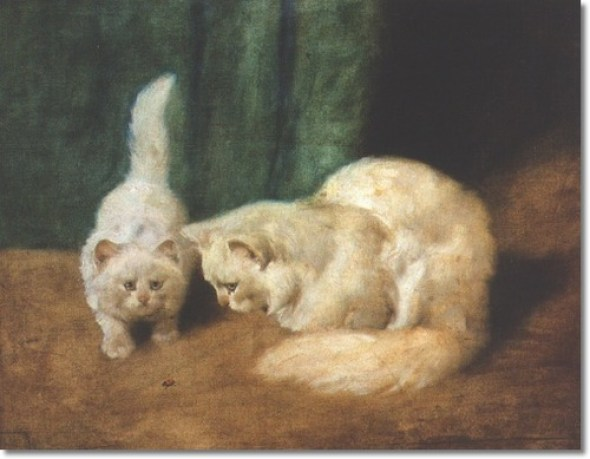 Two White Persian Cats with a Ladybug Private Collection