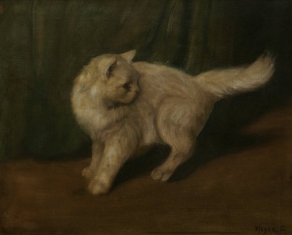 White Cat Turning Back Private Collection