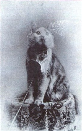 Cosey 1895 winner first cat show
