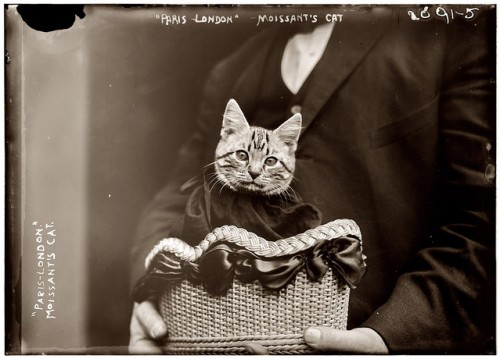 Fifi and Moisant's Funeral kiddo cats in history, famous cats