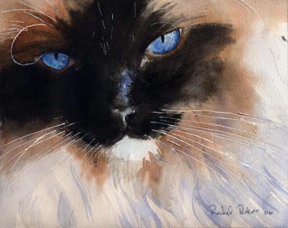 Himlayan, cats in watercolor