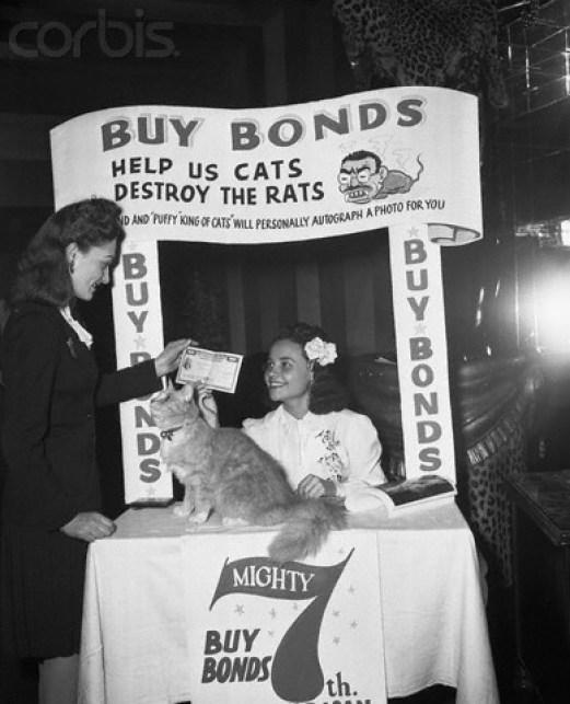 WWII cats kill rats, cats in war
