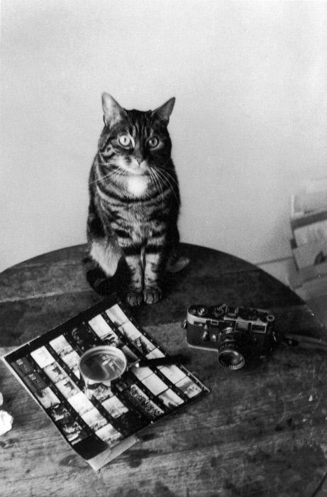 Boubat's cats, Chat, kater