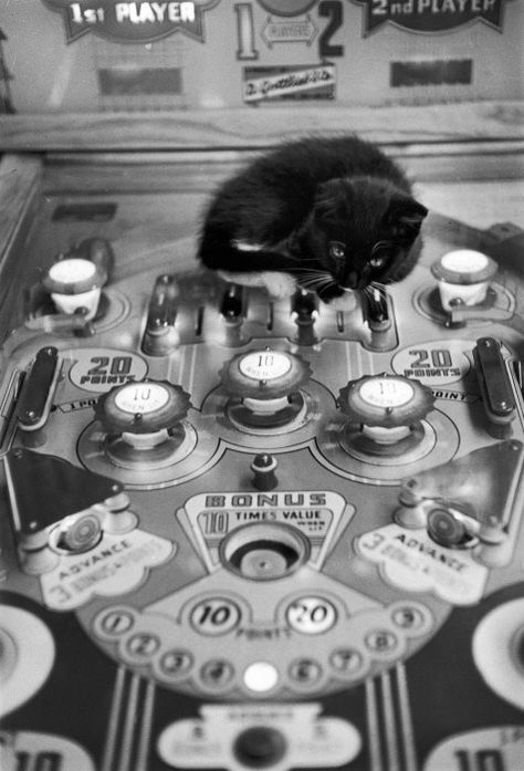 black and white photos of cats