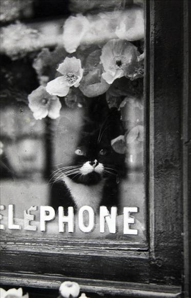 cats in black and white photos, vintage cat photos
