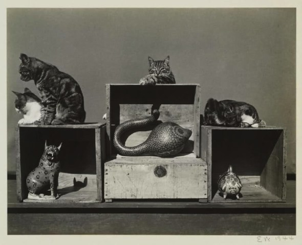 Edward Weston Bodieson, Sidney Roger, Prince Kitty-John, Marco Polo, 1944