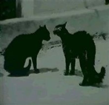Two Cats 1932, Weston photography
