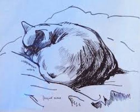 Sleeping Cat, Nam, french cat artist
