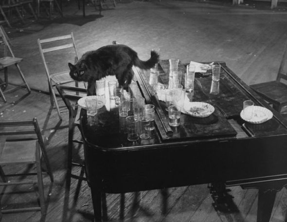 Mili's Blackie steps gingerly amoung empty glasses left on top of the piano after an all night jam session. black cats