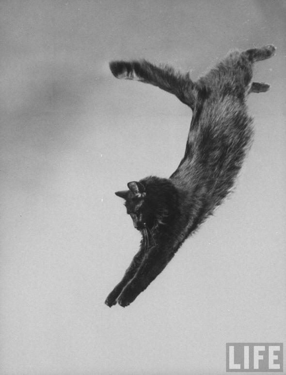 Cat Portrait of Blackie, G Mili's cat. New York, 1943. Source LIFE Photo Archive