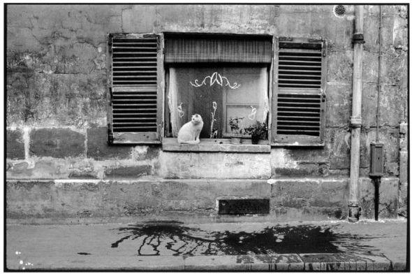 Cartier-Bresson Cat on a Window Ledge 1955