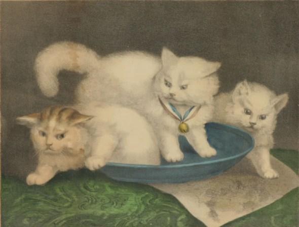Three white kitties, white cats