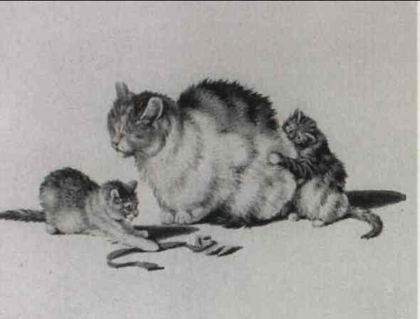 Mind Mother and kittens 8