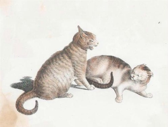 Gottfried Mind Two cats fighting
