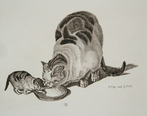 Gottfried Mind mother and kitten drinking milk