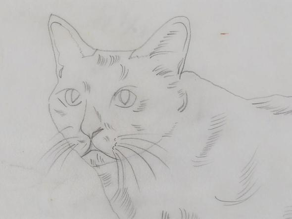 Andy Warhol, Sketch-pencil drawing of cat 1950's