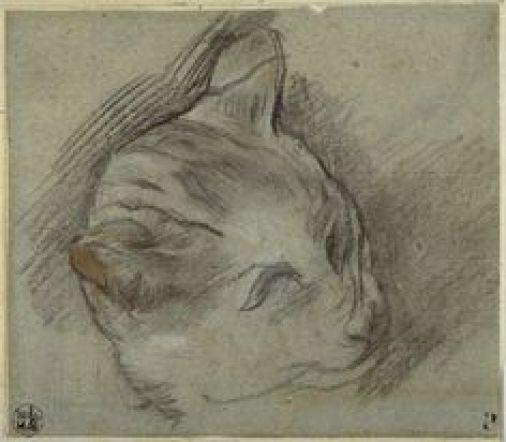 Sketch of a Cat's Head, Federico Barocci