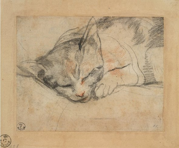 Study of a Cat Sleeping, Federico Barocci