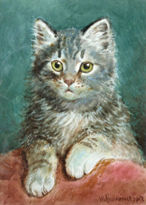 Grey Kitten Posing, Wilson Hepple
