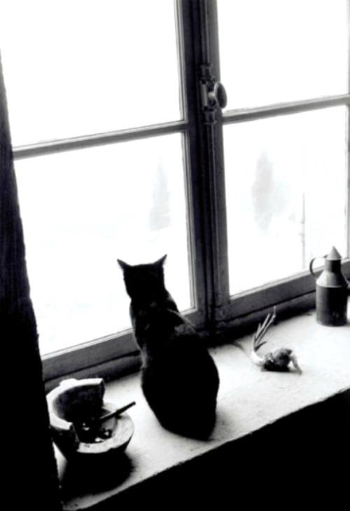 A Black Cat In Gordes, France from La Chanson du chat by Willy Ronis, 1957a
