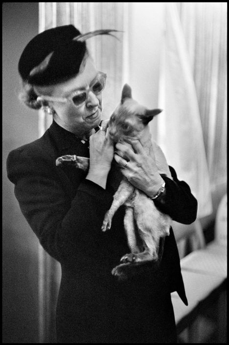 Cat Show, NYC 1953, Elliott Erwitt