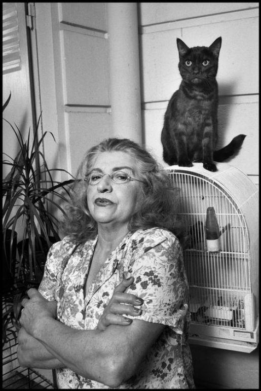 Cat on a Bird Cage, Paris 1990, Elliott Erwitt