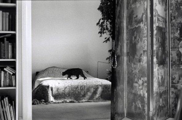 Elliott Erwitt, Black Cat on a Bed