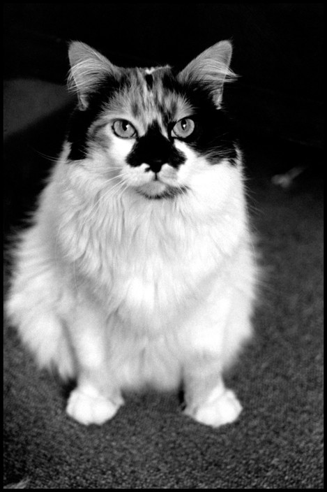 Elliott Erwitt, Cat 1992
