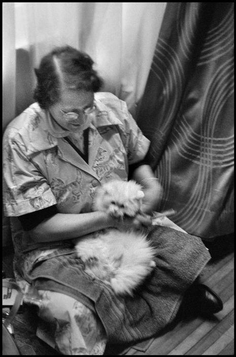 Elliott Erwitt, Woman Grooming a Cat, 1953