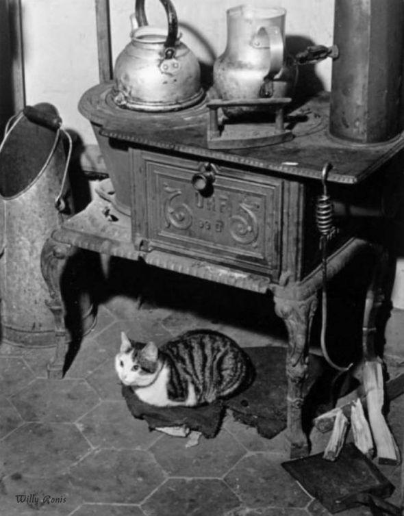 Le chat au poêle Paris 1947 Willy Ronis
