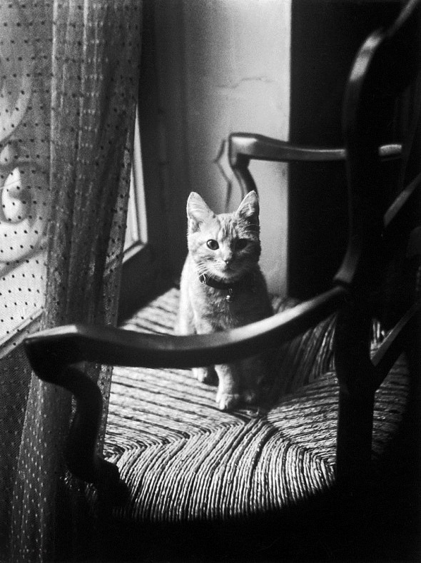Willy Ronis, Cat on a Chair, 1946