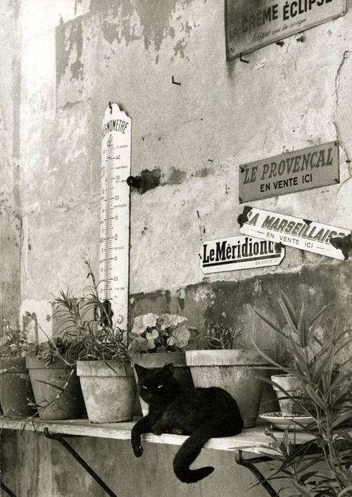 Willy Ronis, Cat in Paris
