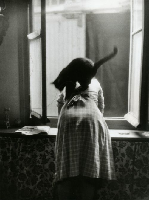 Willy Ronis, cat photography