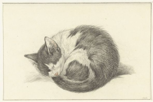 Black and White Cat sleeping, Jean Bernard, 1825