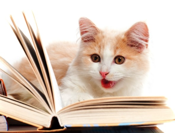 cat reading a book. Cat Book Reviews Index at The Great Cat